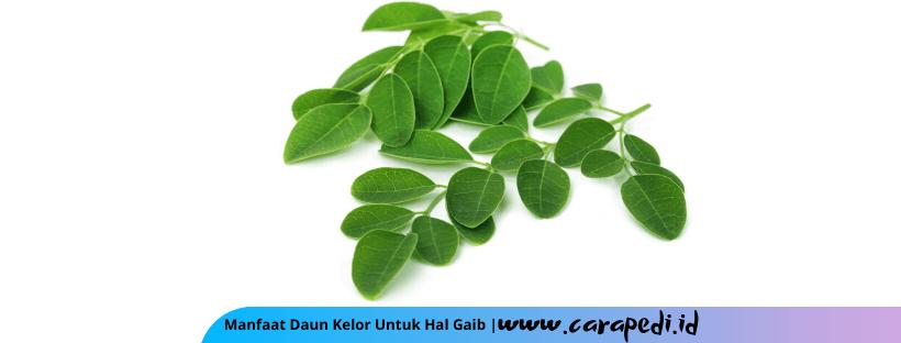 manfaat daun kelor untuk gaib