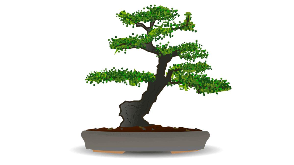 30 manfaat daun bidara